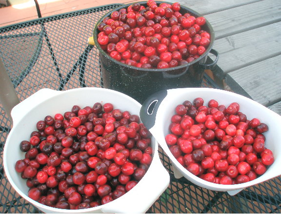 Sweet Cherry Recipes